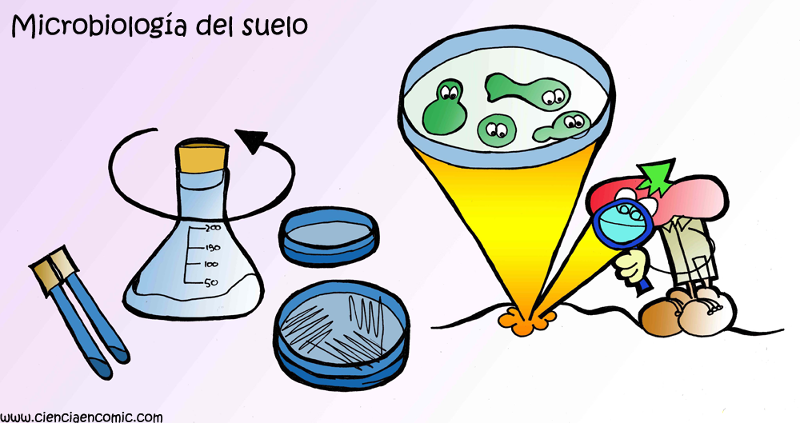 15- Microbiología del suelo